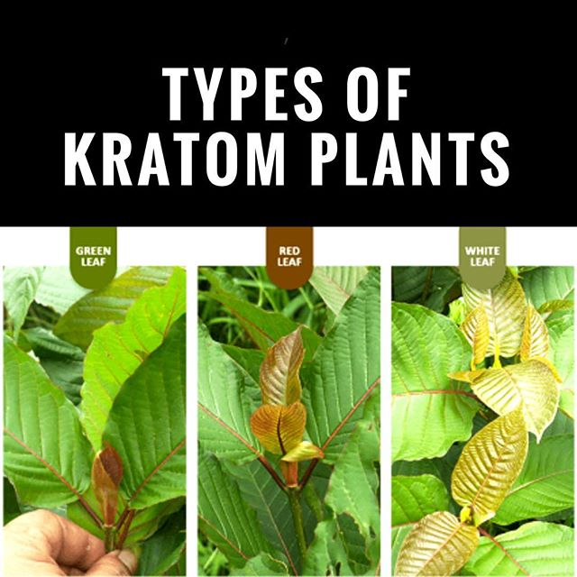 Best Kratom for Energy