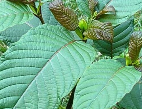 Does Kratom Actually Work?