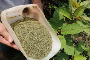 Pure kratom that is pesticide free
