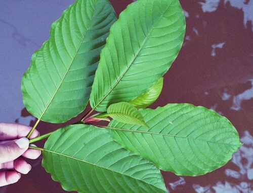 How to Buy Kratom Online: Finding the Best Quality Product